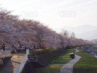 公園の景色の写真・画像素材[1111878]