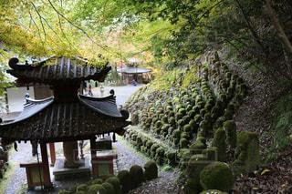 庭の植物の写真・画像素材[742495]
