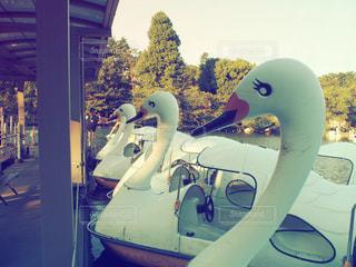 あひるボートの写真・画像素材[742982]