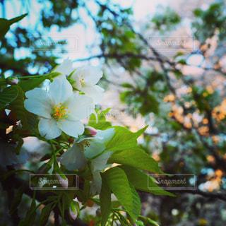 近くの花のアップの写真・画像素材[1100818]