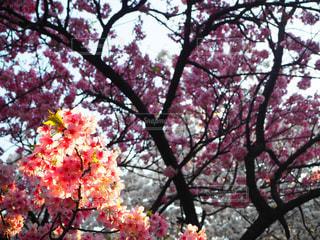 木の上の紫色の花一杯の花瓶の写真・画像素材[1100819]