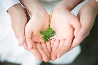 緑の葉を持っている手 - No.742880