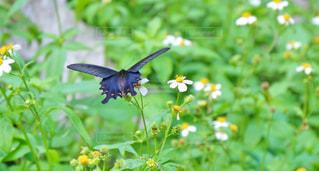 黄色の花と鳥 - No.856446