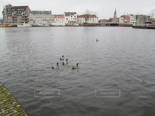 オランダ・デルフト、古都の運河で泳ぐかるがもたちの写真・画像素材[801772]