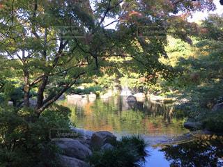 好古園、日本庭園の写真・画像素材[830670]