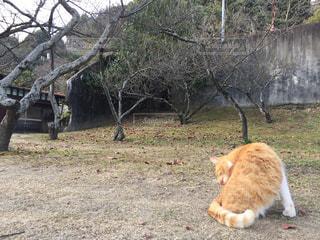 毛づくろいをする猫、尾道の写真・画像素材[939660]
