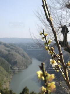 背景の山と木の写真・画像素材[1087309]