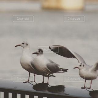隅田川の鳥の写真・画像素材[1094251]