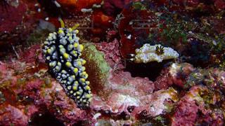 魚のクローズアップの写真・画像素材[2389207]