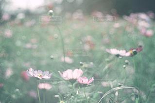 近くの花のアップの写真・画像素材[743543]