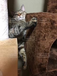 ボックスに座って猫がねむりかぶっているの写真・画像素材[743847]