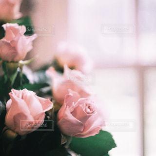 近くの花のアップの写真・画像素材[1292903]