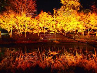 日没の前にツリーの写真・画像素材[743584]