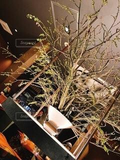クリスマスツリーの写真・画像素材[4142831]