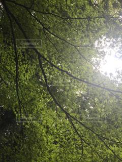 フォレスト内のツリーの写真・画像素材[744540]