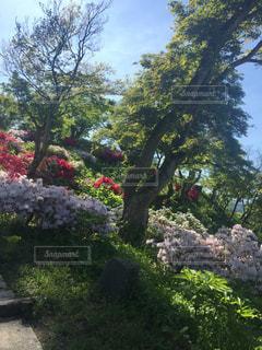 茂みや木のグループの写真・画像素材[744563]