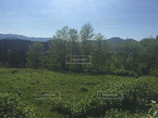 背景の木と大規模なグリーン フィールドの写真・画像素材[744564]