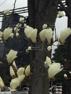 テーブルの上の花の花瓶の写真・画像素材[744599]