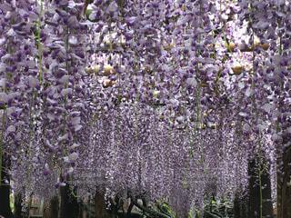 近くの花のアップの写真・画像素材[744618]