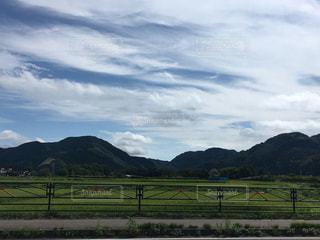 緑豊かな緑の草原で放牧馬の写真・画像素材[744651]