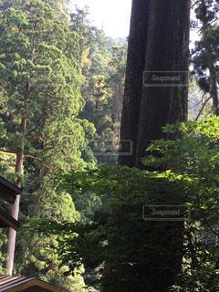 フォレスト内のツリーの写真・画像素材[748184]
