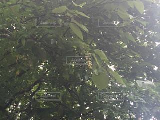 近くの木のアップ - No.755133