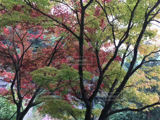 公園の大きな木の写真・画像素材[842164]