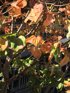 近くの木のアップの写真・画像素材[866291]