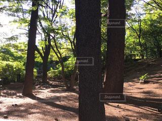フォレスト内のツリーの写真・画像素材[1293294]