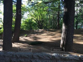 フォレスト内のツリーの写真・画像素材[1293295]