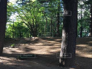 フォレスト内のツリーの写真・画像素材[1293296]
