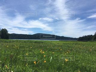 フィールド内の黄色の花の写真・画像素材[1388487]