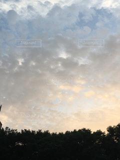 曇りの日に空を飛んでいる人の写真・画像素材[1388496]