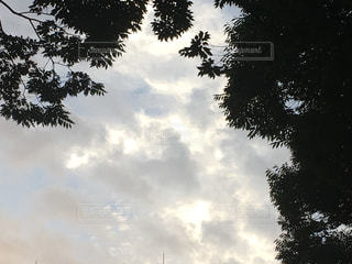 曇りの日にツリーの写真・画像素材[1388497]