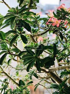 緑の葉を持つ植物の写真・画像素材[2107039]
