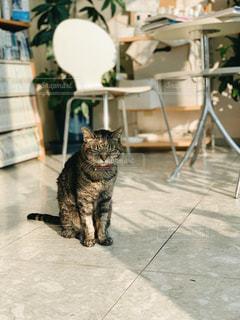 敷物の上に座っている猫の写真・画像素材[2107040]