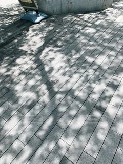 木漏れ日の写真・画像素材[2107043]