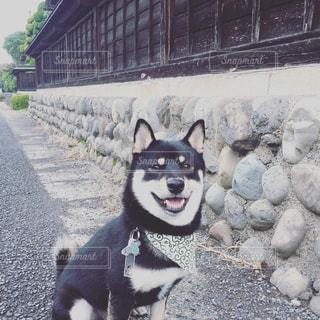 江戸情緒の写真・画像素材[745001]