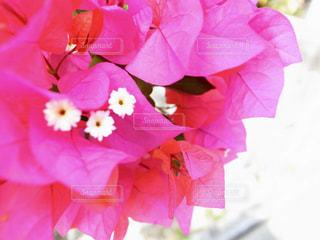 近くの花のアップの写真・画像素材[1285137]
