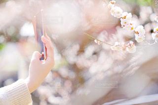 花を撮る手の写真・画像素材[1833833]