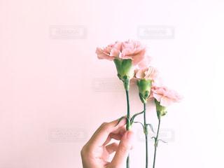 花を生ける手の写真・画像素材[2337526]