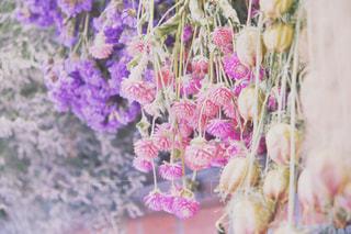 花のクローズアップの写真・画像素材[2338969]