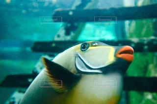 熱帯魚 - No.747998
