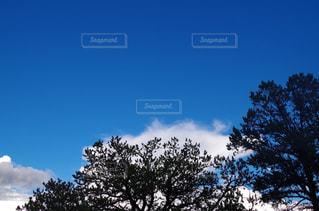 近くの木のアップの写真・画像素材[745848]