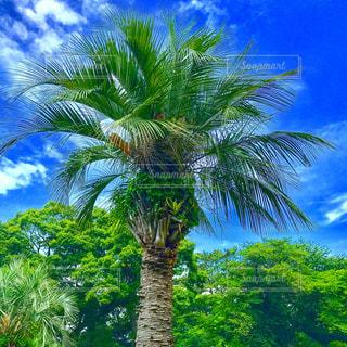ツリーの横にあるヤシの木のグループの写真・画像素材[746623]
