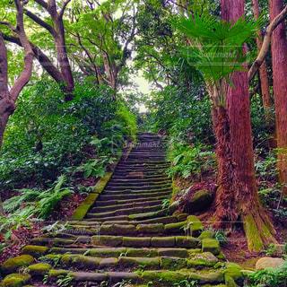 森の大きな木の写真・画像素材[746652]