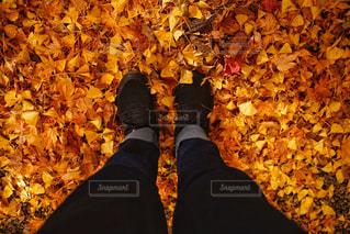 黄色いさ絨毯の写真・画像素材[1498232]