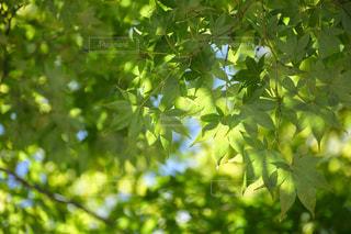 緑と青空の写真・画像素材[1498234]