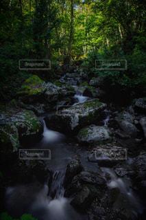 森の泉の写真・画像素材[1691945]