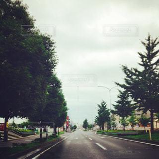 並木通りの写真・画像素材[747390]